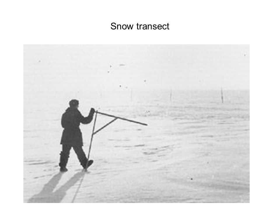 Snow transect