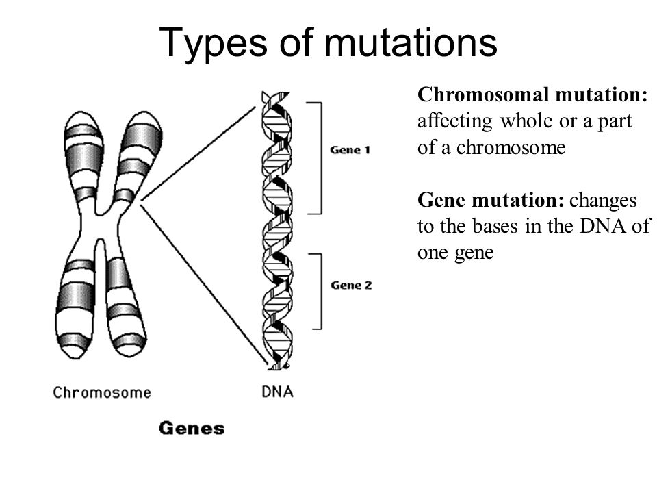 Types of mutations Chromosomal mutation: affecting whole or a part of a chromosome Gene mutation: changes to the bases in the DNA of one gene
