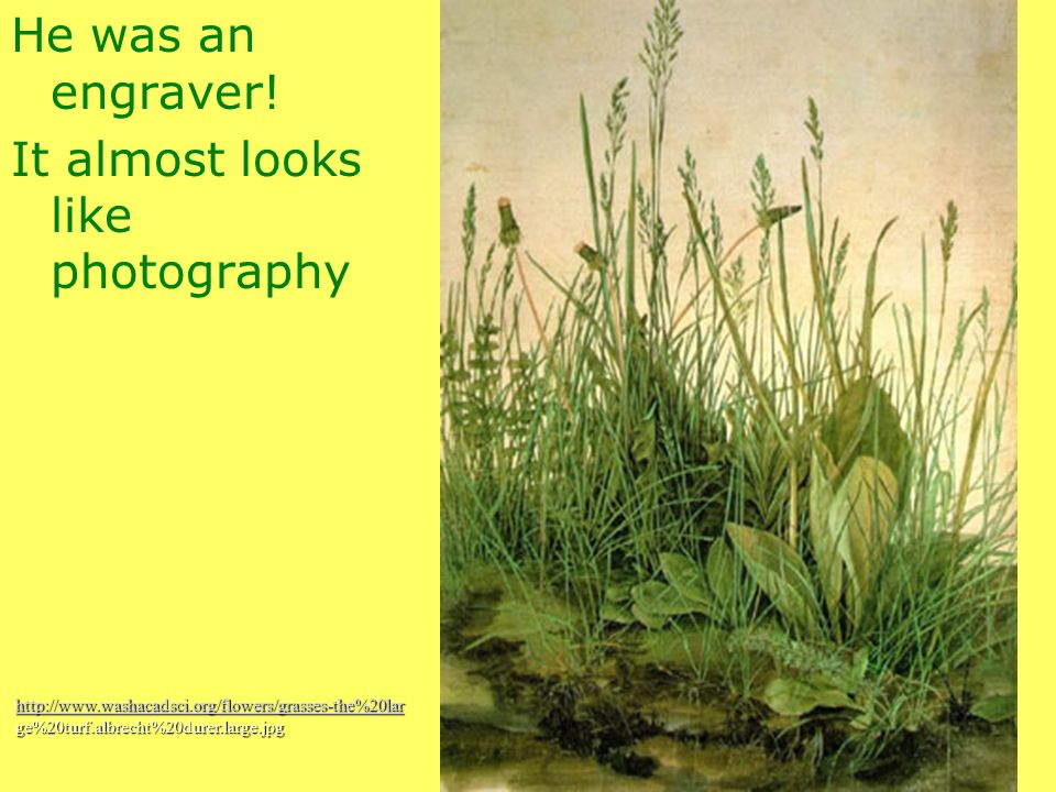 He was an engraver! It almost looks like photography http://www.washacadsci.org/flowers/grasses-the%20lar ge%20turf.albrecht%20durer.large.jpg
