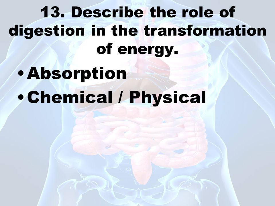 13. Describe the role of digestion in the transformation of energy. Absorption Chemical / Physical