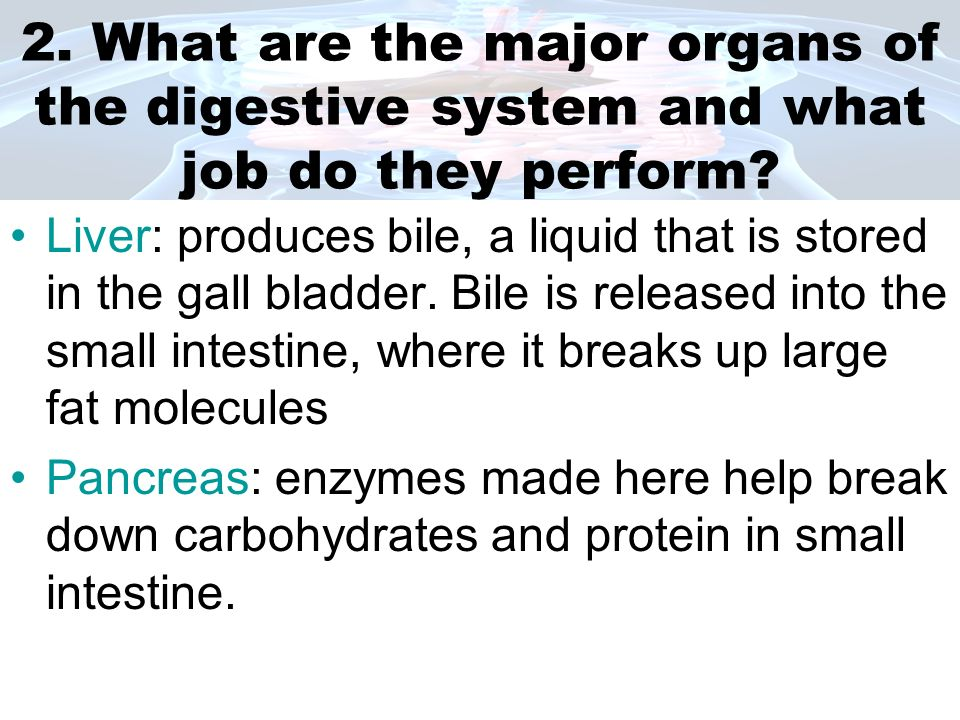 Stomach: grinds the food into smaller pieces, gastric juices and acids break apart large protein molecules.