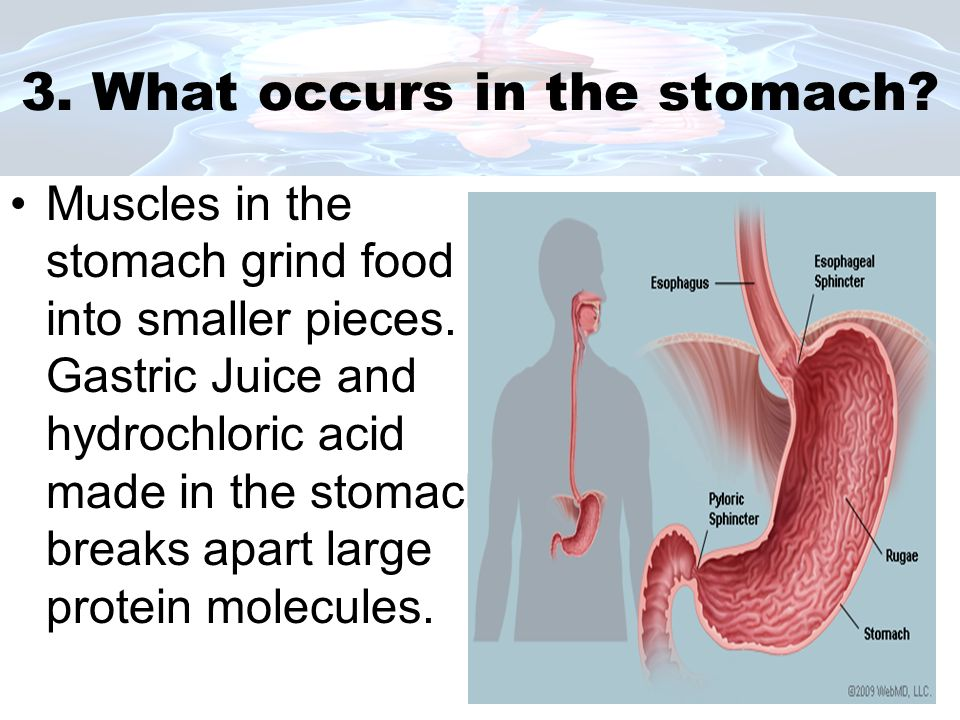 4.What occurs in the small and large intestines.