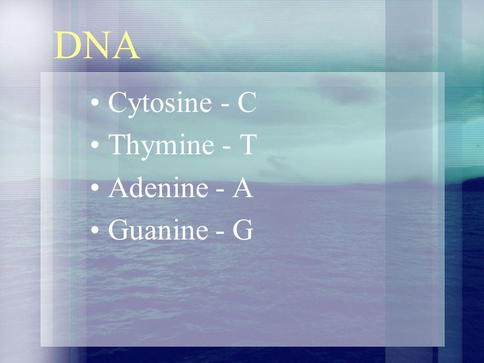 DNA Cytosine - C Thymine - T Adenine - A Guanine - G