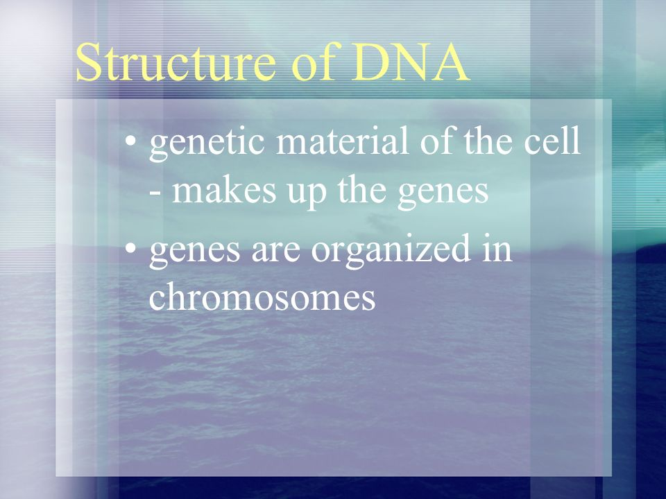 Structure of DNA genetic material of the cell - makes up the genes genes are organized in chromosomes