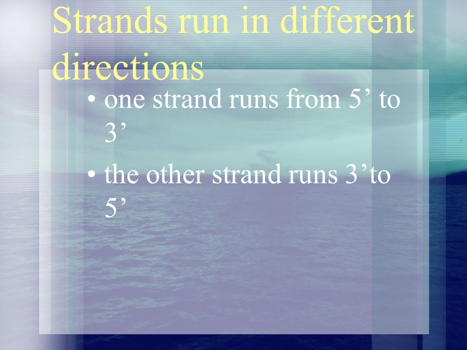 Strands run in different directions one strand runs from 5 to 3 the other strand runs 3to 5