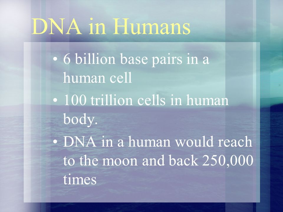 DNA in Humans 6 billion base pairs in a human cell 100 trillion cells in human body.