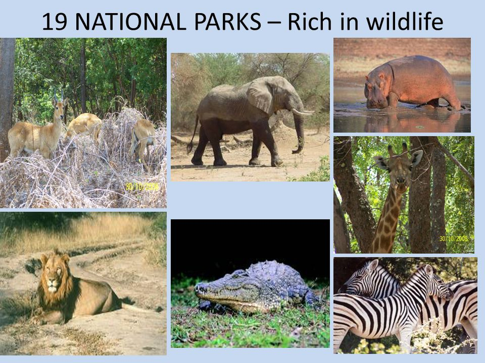 19 NATIONAL PARKS – Rich in wildlife