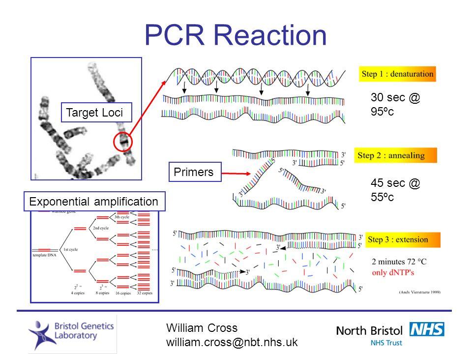 William Cross william.cross@nbt.nhs.uk PCR Reaction Target Loci 30 sec @ 95ºc Exponential amplification 45 sec @ 55ºc Primers