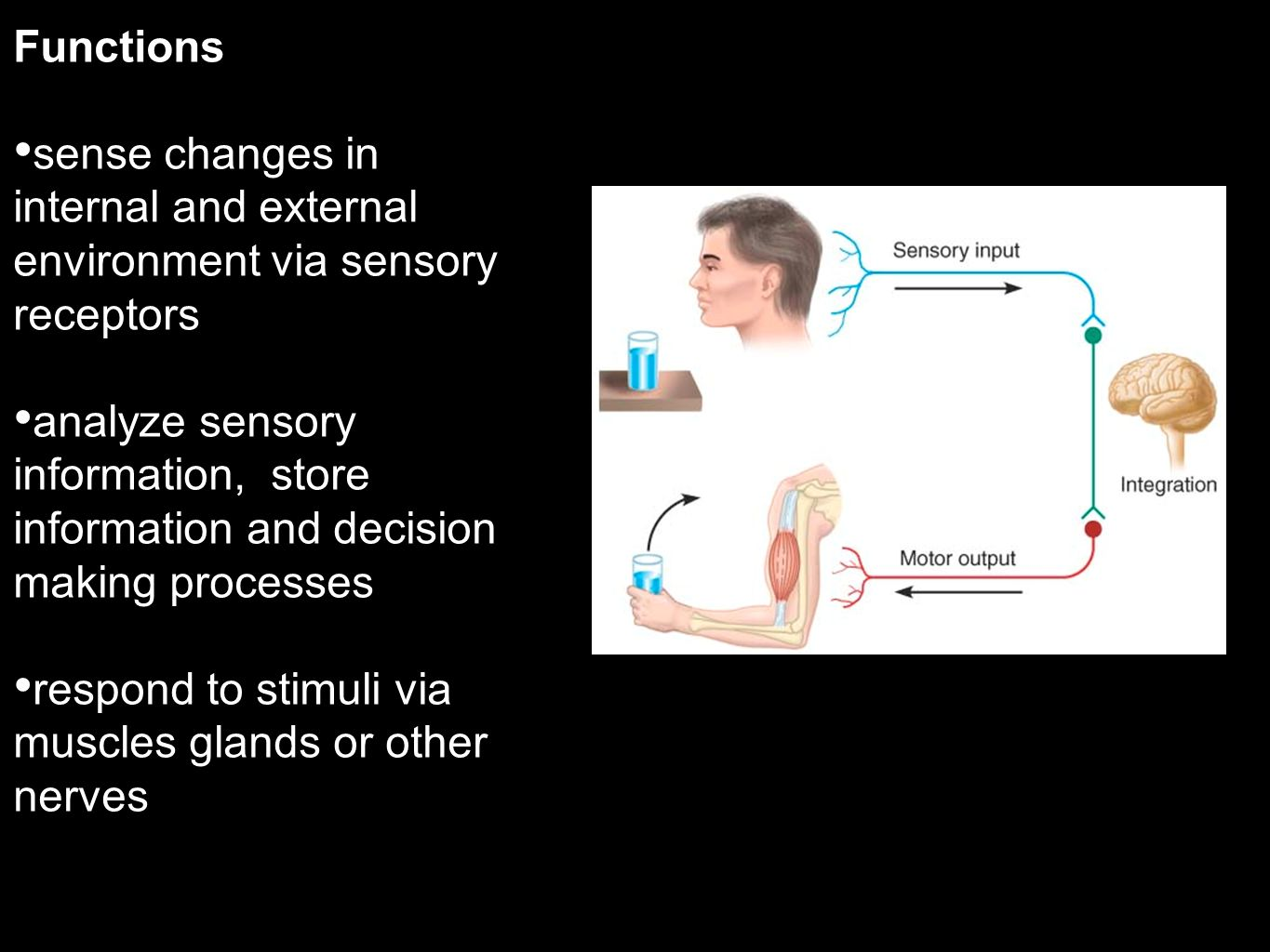 Functions sense changes in internal and external environment via sensory receptors analyze sensory information, store information and decision making