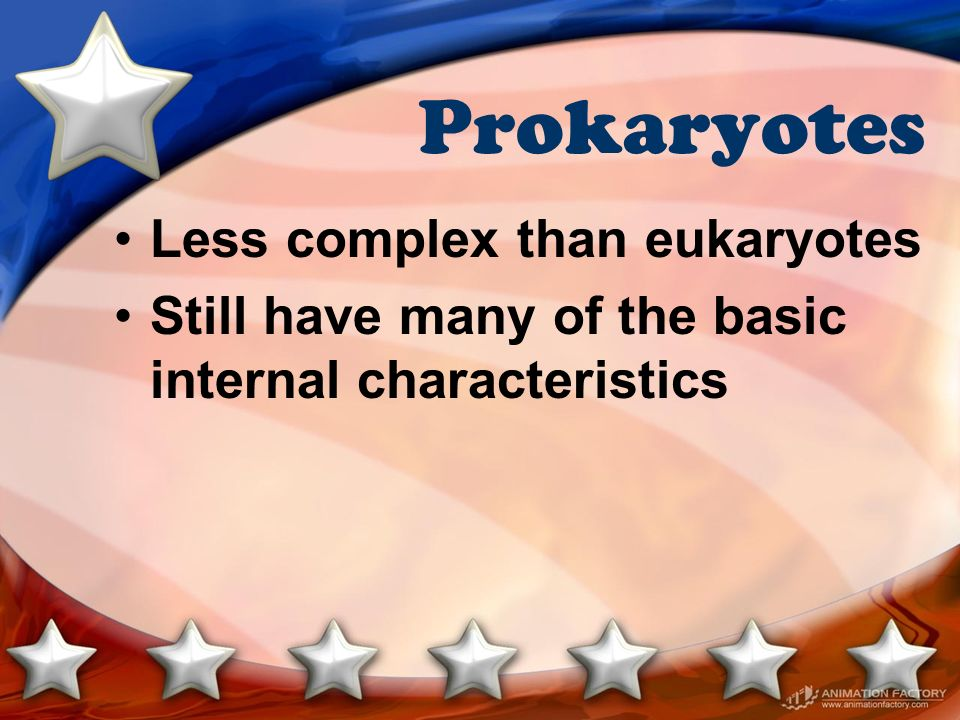Prokaryotes Less complex than eukaryotes Still have many of the basic internal characteristics