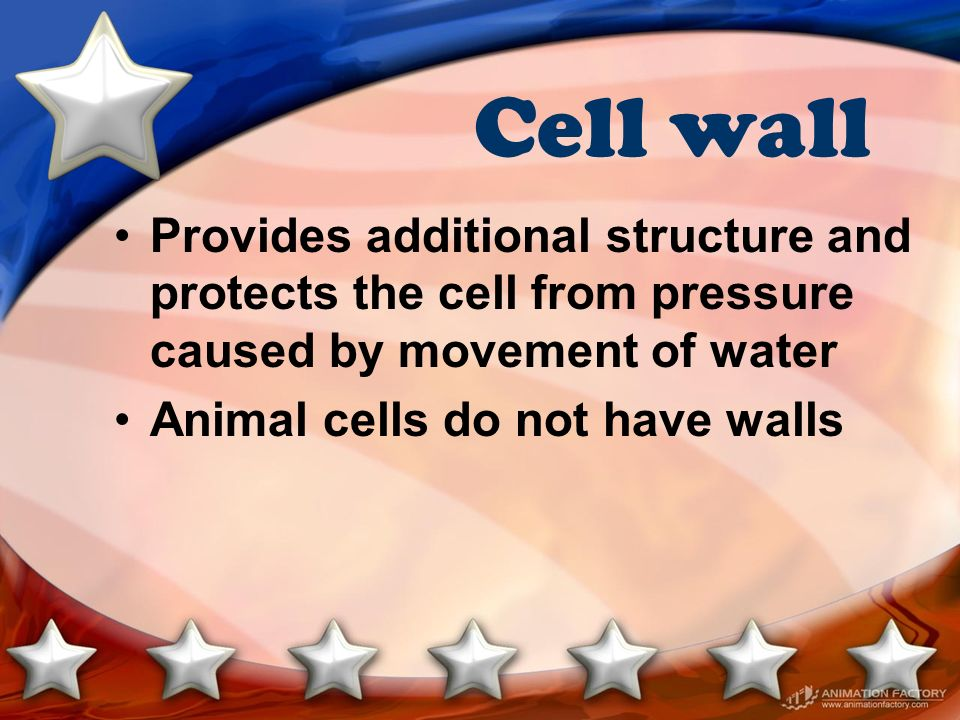 Cell wall Provides additional structure and protects the cell from pressure caused by movement of water Animal cells do not have walls