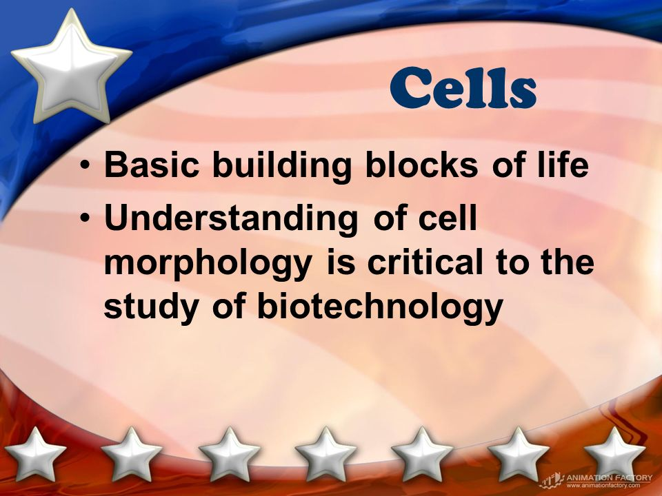 Cells Basic building blocks of life Understanding of cell morphology is critical to the study of biotechnology