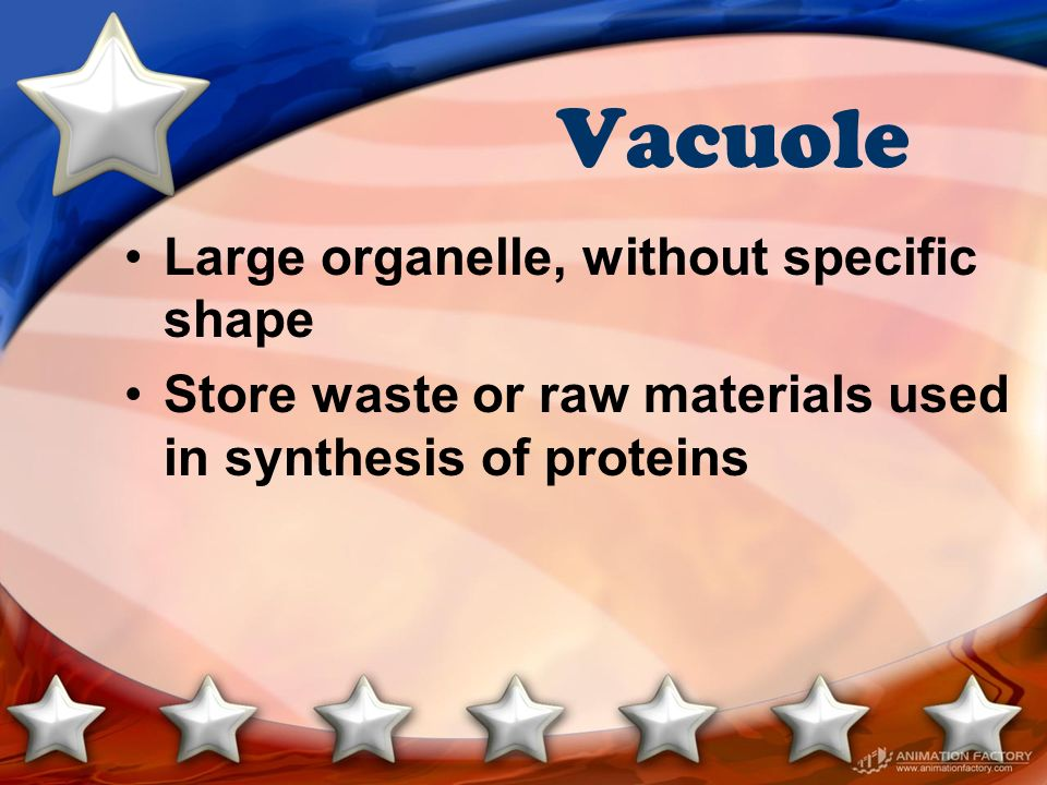 Vacuole Large organelle, without specific shape Store waste or raw materials used in synthesis of proteins