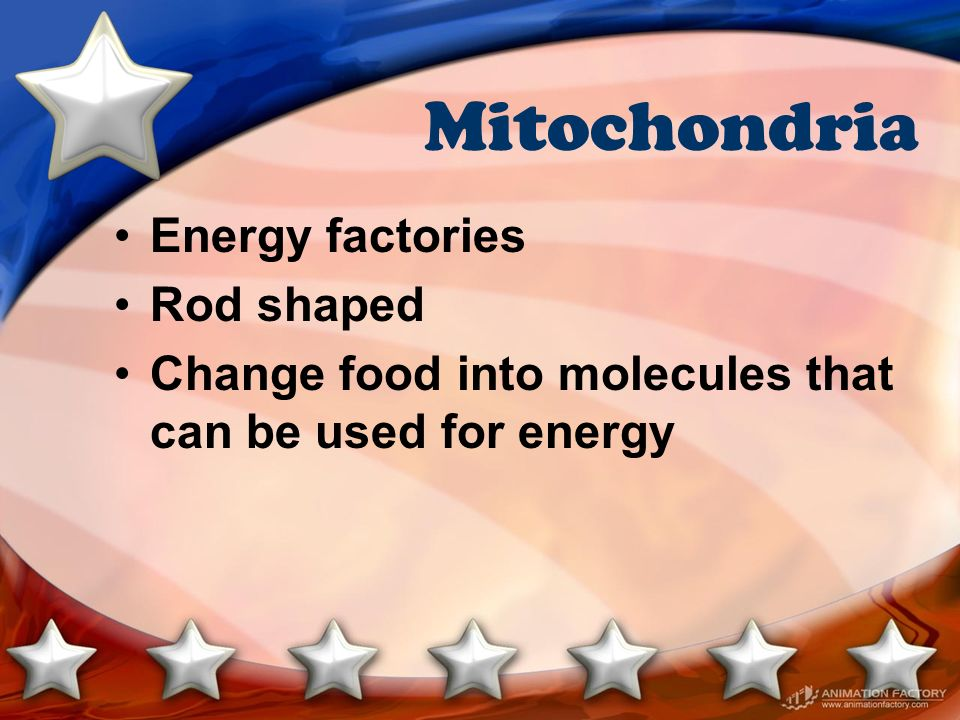 Mitochondria Energy factories Rod shaped Change food into molecules that can be used for energy