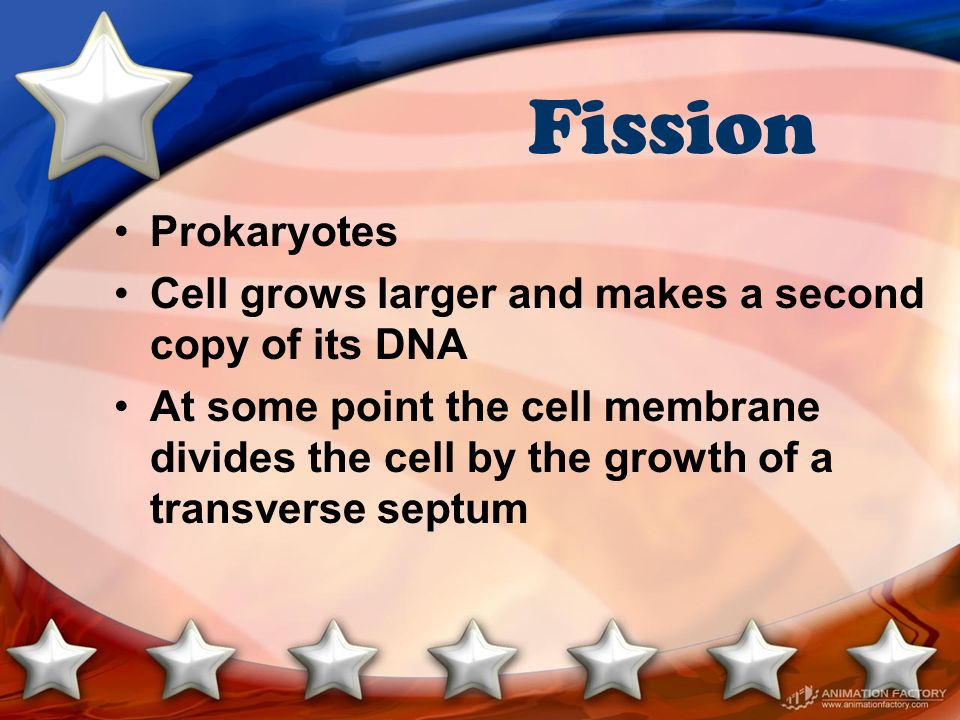 Fission Prokaryotes Cell grows larger and makes a second copy of its DNA At some point the cell membrane divides the cell by the growth of a transvers