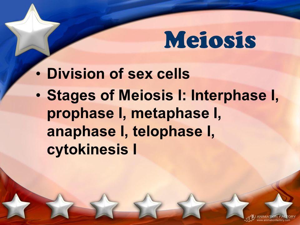 Meiosis Division of sex cells Stages of Meiosis I: Interphase I, prophase I, metaphase I, anaphase I, telophase I, cytokinesis I
