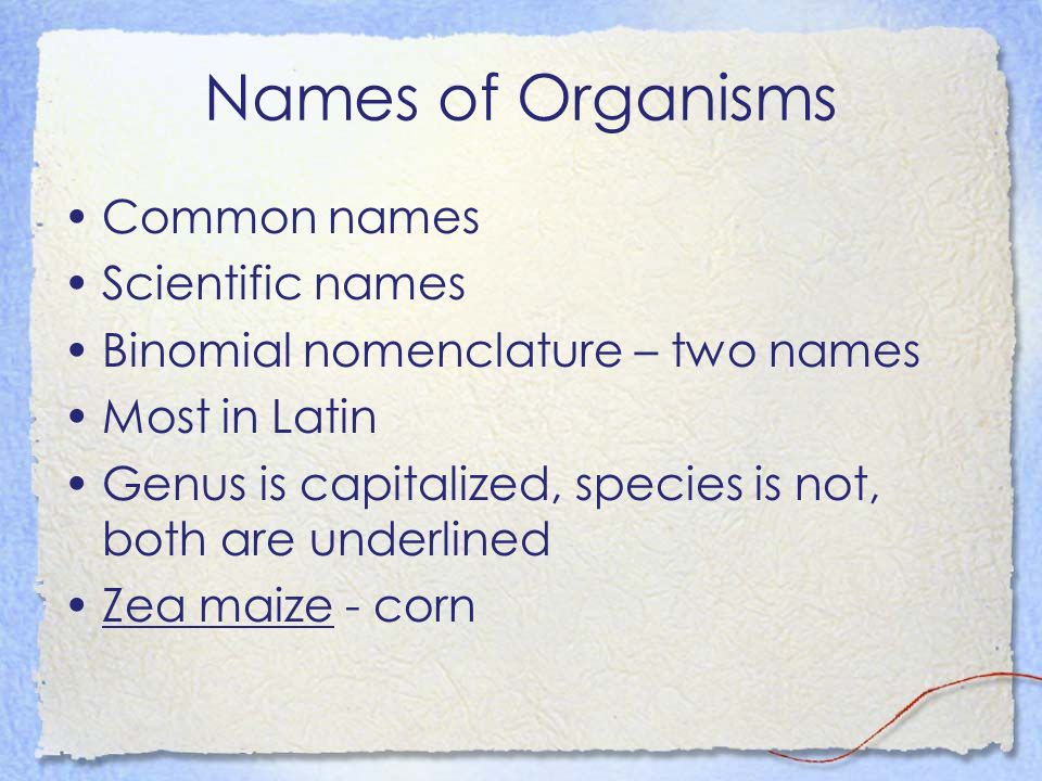Names of Organisms Common names Scientific names Binomial nomenclature – two names Most in Latin Genus is capitalized, species is not, both are underl