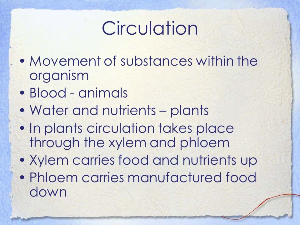 Circulation Movement of substances within the organism Blood - animals Water and nutrients – plants In plants circulation takes place through the xylem and phloem Xylem carries food and nutrients up Phloem carries manufactured food down