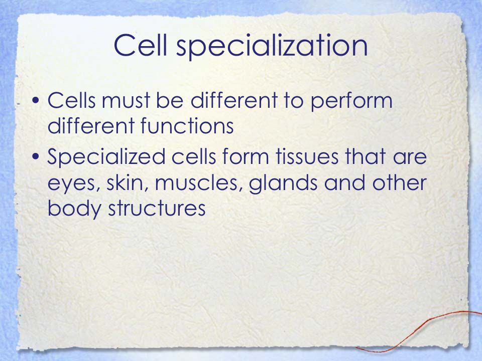 Cell specialization Cells must be different to perform different functions Specialized cells form tissues that are eyes, skin, muscles, glands and oth