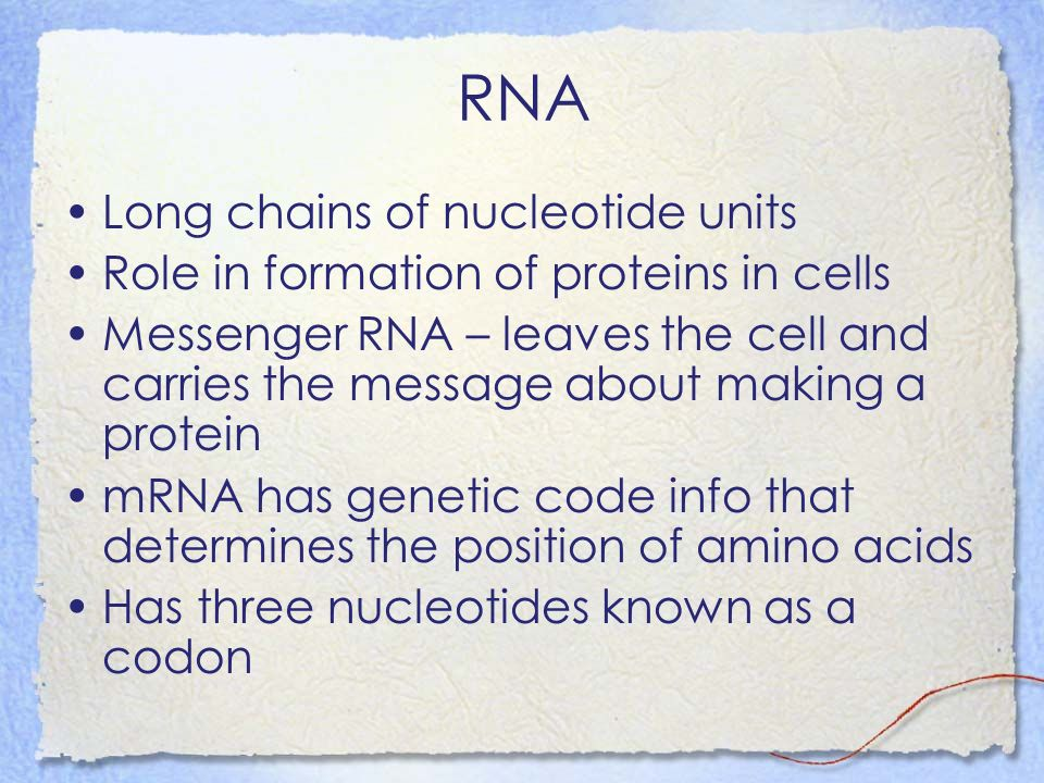 RNA Long chains of nucleotide units Role in formation of proteins in cells Messenger RNA – leaves the cell and carries the message about making a prot