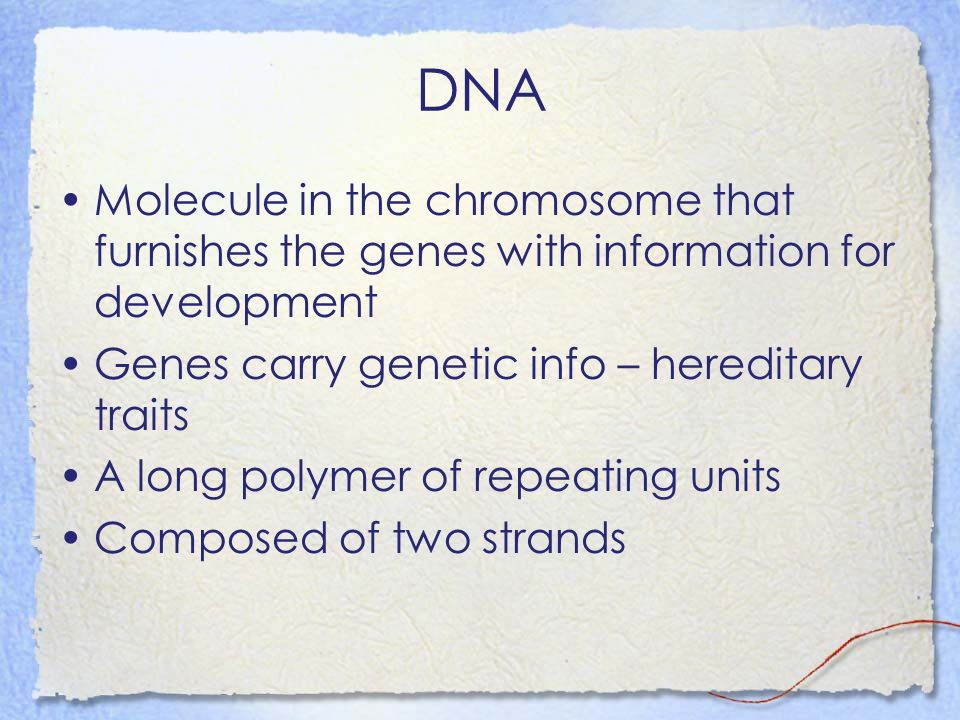 DNA Molecule in the chromosome that furnishes the genes with information for development Genes carry genetic info – hereditary traits A long polymer o