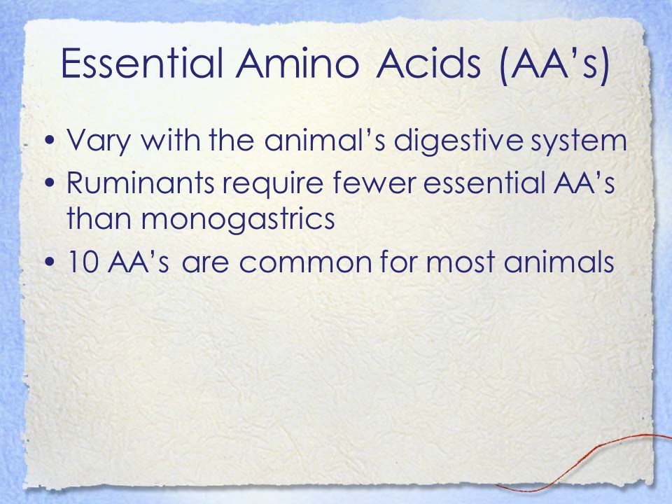 Essential Amino Acids (AAs) Vary with the animals digestive system Ruminants require fewer essential AAs than monogastrics 10 AAs are common for most animals