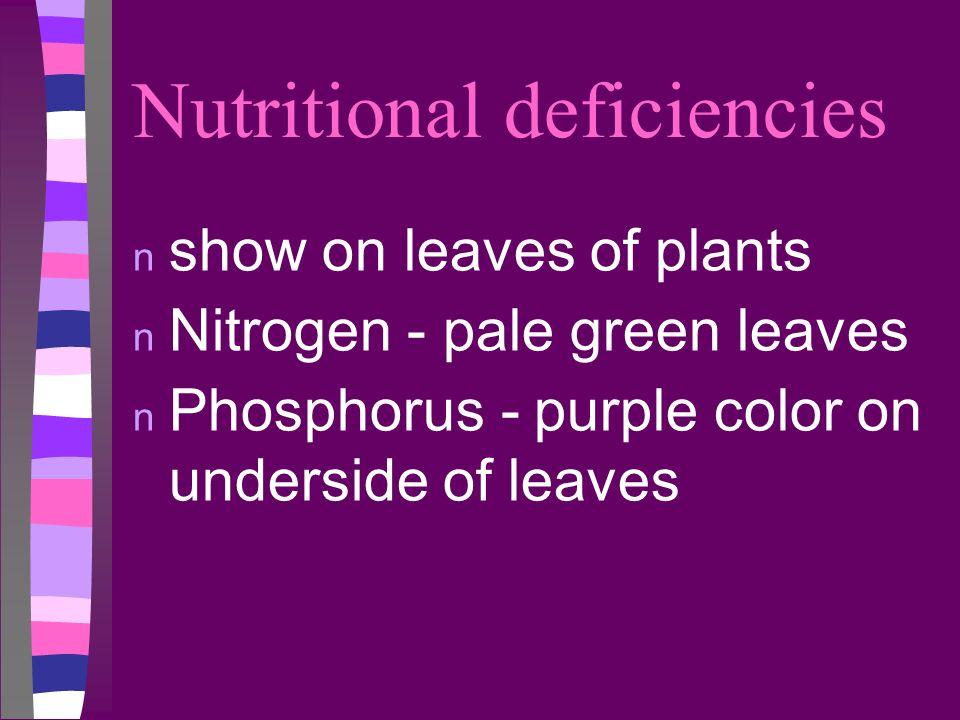 Nutritional deficiencies n show on leaves of plants n Nitrogen - pale green leaves n Phosphorus - purple color on underside of leaves