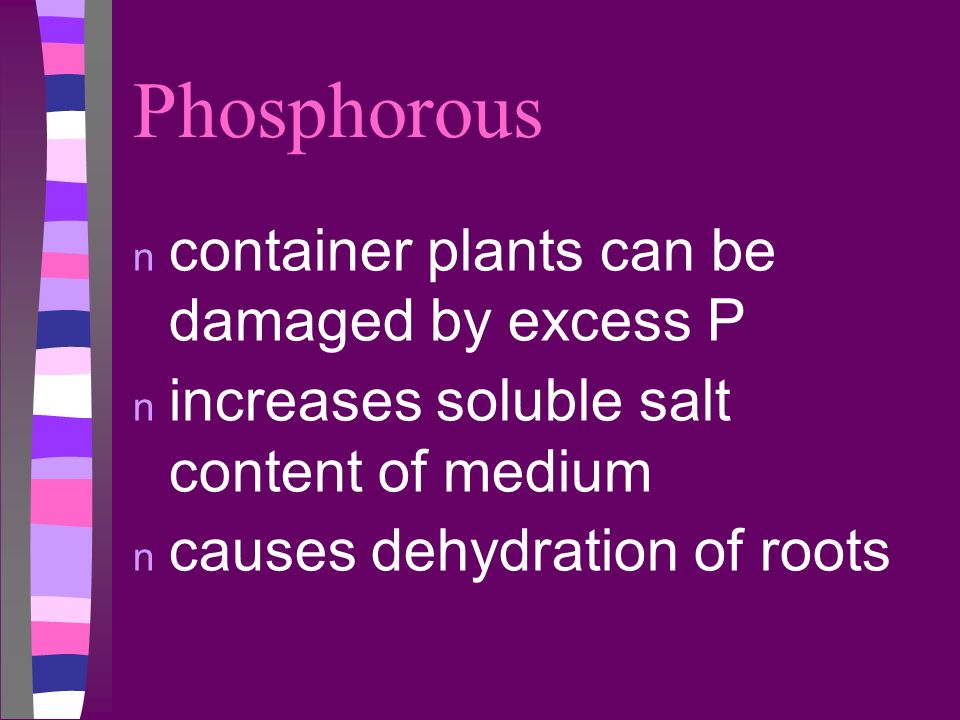 Phosphorous n container plants can be damaged by excess P n increases soluble salt content of medium n causes dehydration of roots