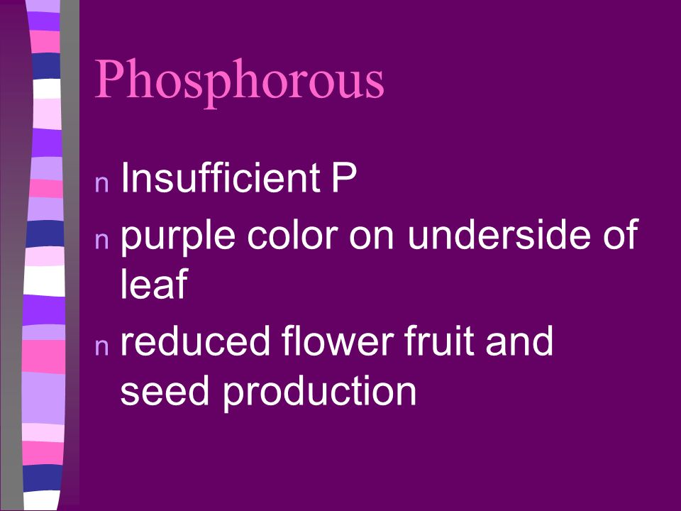Phosphorous n Insufficient P n purple color on underside of leaf n reduced flower fruit and seed production