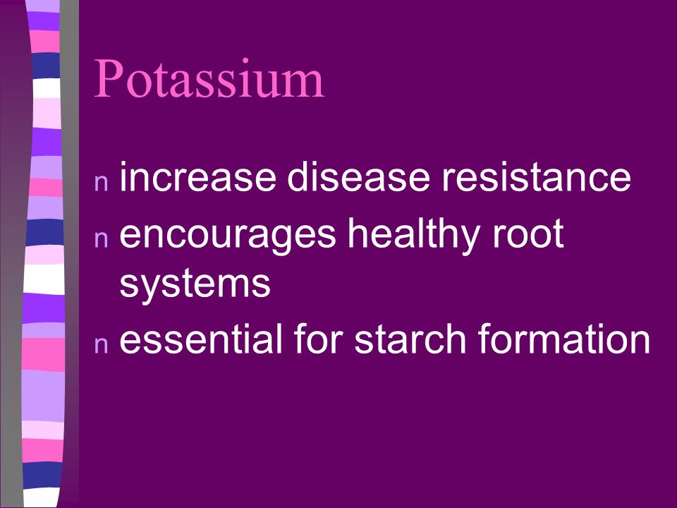 Potassium n increase disease resistance n encourages healthy root systems n essential for starch formation