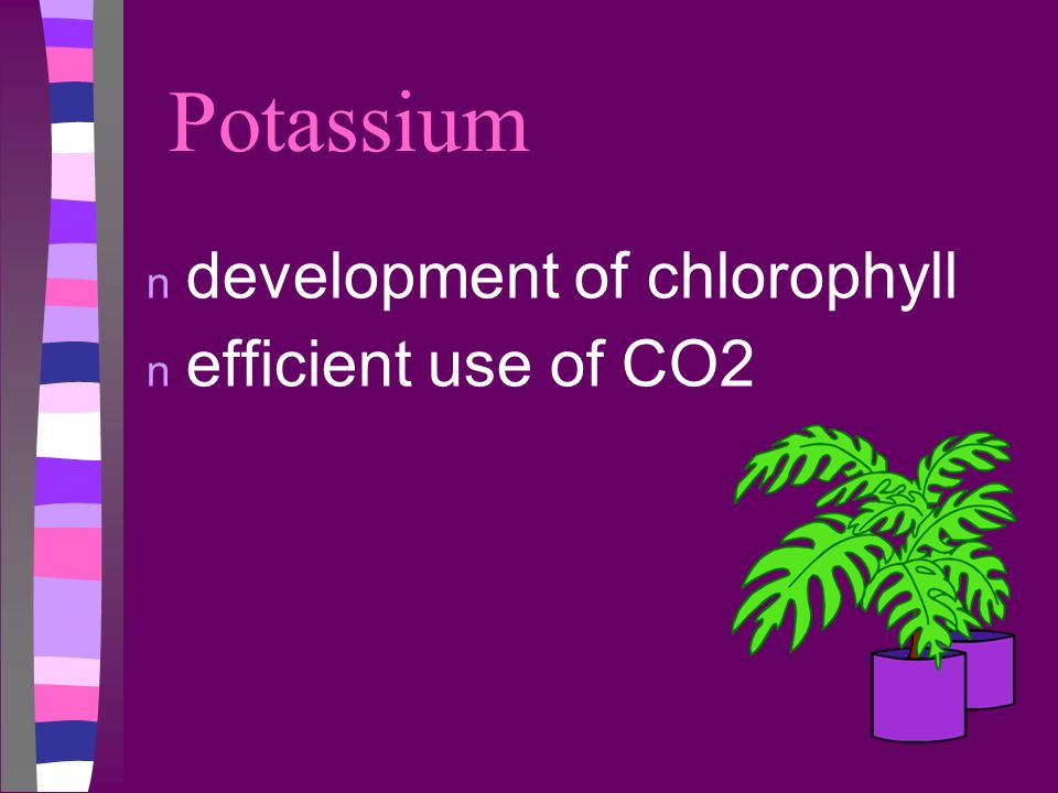 Potassium n development of chlorophyll n efficient use of CO2