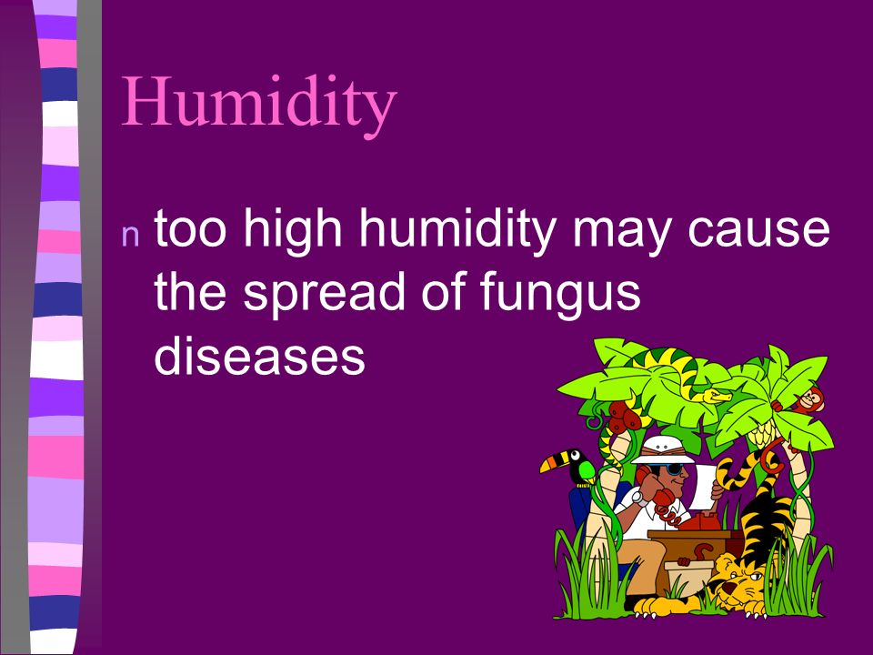 Humidity n too high humidity may cause the spread of fungus diseases
