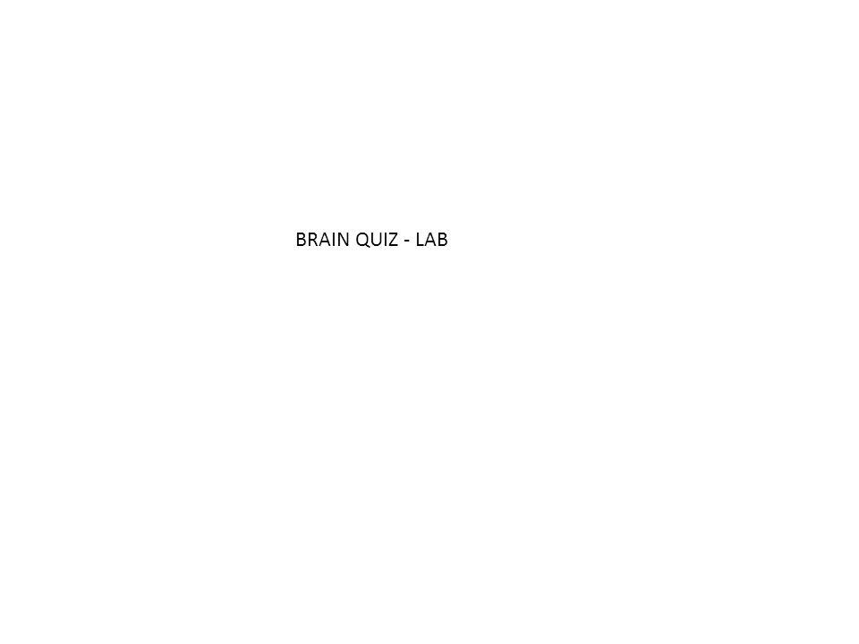 BRAIN QUIZ - LAB