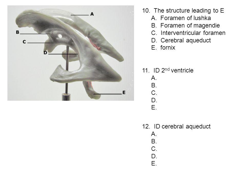 10. The structure leading to E A. Foramen of lushka B. Foramen of magendie C. Interventricular foramen D. Cerebral aqueduct E. fornix 11. ID 2 nd vent