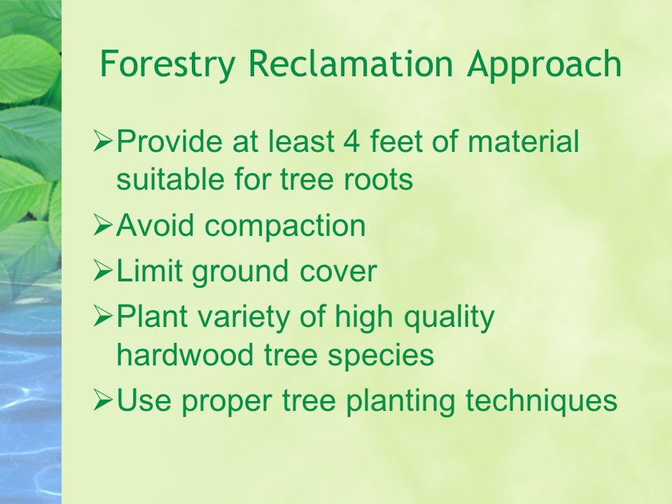Forestry Reclamation Approach Provide at least 4 feet of material suitable for tree roots Avoid compaction Limit ground cover Plant variety of high qu
