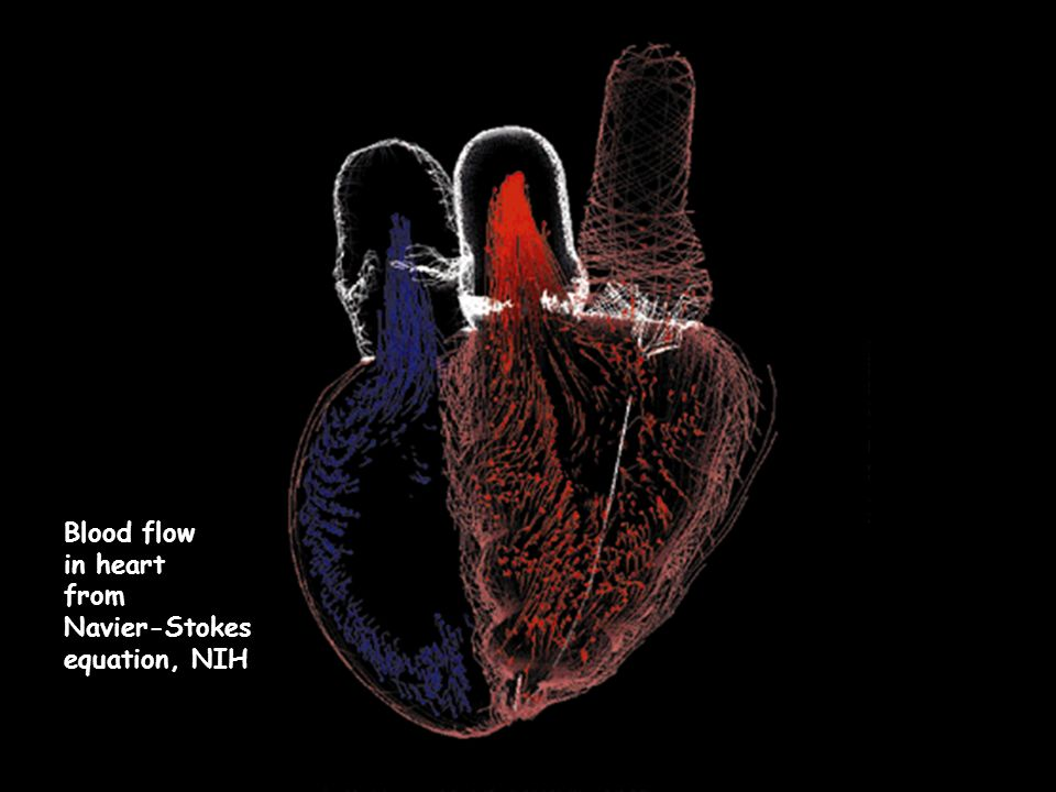 Blood flow in heart from Navier-Stokes equation, NIH