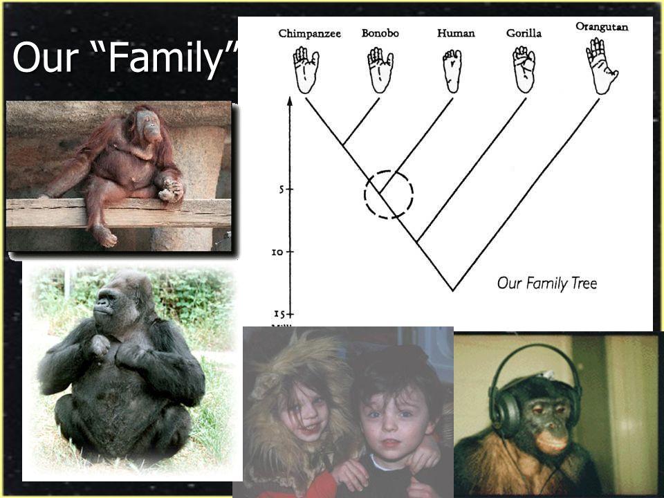 ...And Then There Was One Sixteen Species of Extinct Humans Sixteen Species of Extinct Humans Ardipithecus ramidus Australopithecus anamensis Australopithecus afarensis Australopithecus bahrelghazali Australopithecus aethiopicus Paranthropus boisei Paranthropus robustus Australopithecus africanus Australopithecus garhi Homo rudolfensis Homo habilis Homo ergaster Homo erectus Homo antecessor Homo heidelbegensis Homo neanderthalensis Ardipithecus ramidus Australopithecus anamensis Australopithecus afarensis Australopithecus bahrelghazali Australopithecus aethiopicus Paranthropus boisei Paranthropus robustus Australopithecus africanus Australopithecus garhi Homo rudolfensis Homo habilis Homo ergaster Homo erectus Homo antecessor Homo heidelbegensis Homo neanderthalensis Ardipithecus ramidus Australopithecus anamensis Australopithecus afarensis Australopithecus bahrelghazali Australopithecus aethiopicus Paranthropus boisei Paranthropus robustus Australopithecus africanus Australopithecus garhi Homo rudolfensis Homo habilis Homo ergaster Homo erectus Homo antecessor Homo heidelbegensis Homo neanderthalensis Ardipithecus ramidus Australopithecus anamensis Australopithecus afarensis Australopithecus bahrelghazali Australopithecus aethiopicus Paranthropus boisei Paranthropus robustus Australopithecus africanus Australopithecus garhi Homo rudolfensis Homo habilis Homo ergaster Homo erectus Homo antecessor Homo heidelbegensis Homo neanderthalensis Homo sapiens Homo sapiens Homo sapiens Homo sapiens