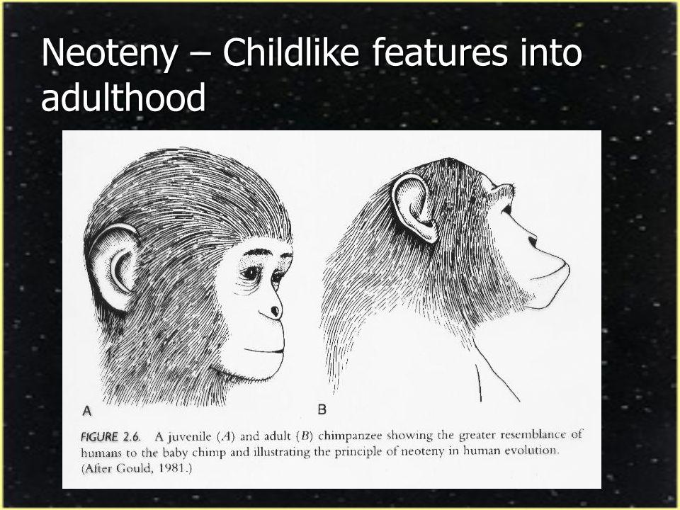 Bonobo and Common Chimp