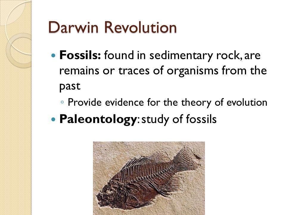 Darwin Revolution Fossils: found in sedimentary rock, are remains or traces of organisms from the past Provide evidence for the theory of evolution Pa
