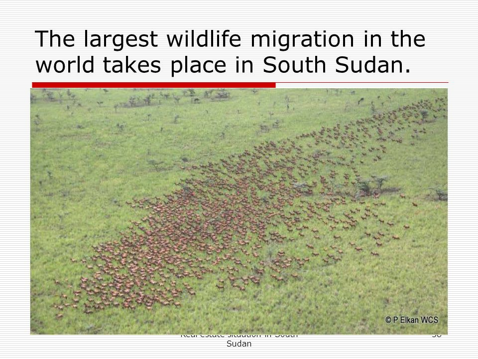 Real estate situation in South Sudan 38 The largest wildlife migration in the world takes place in South Sudan.