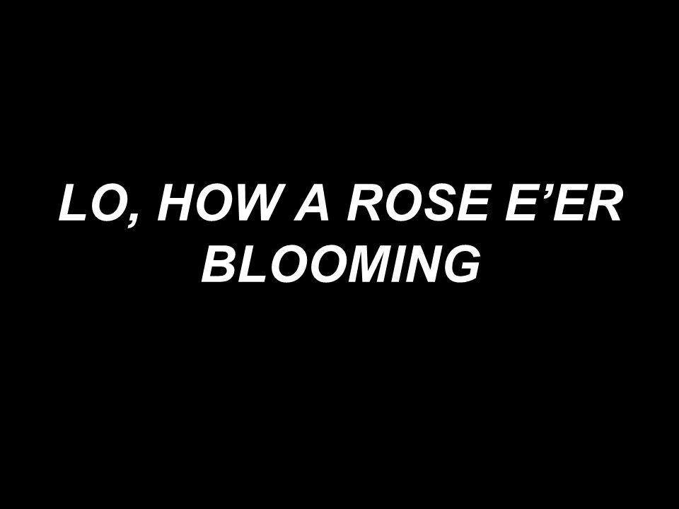 LO, HOW A ROSE EER BLOOMING