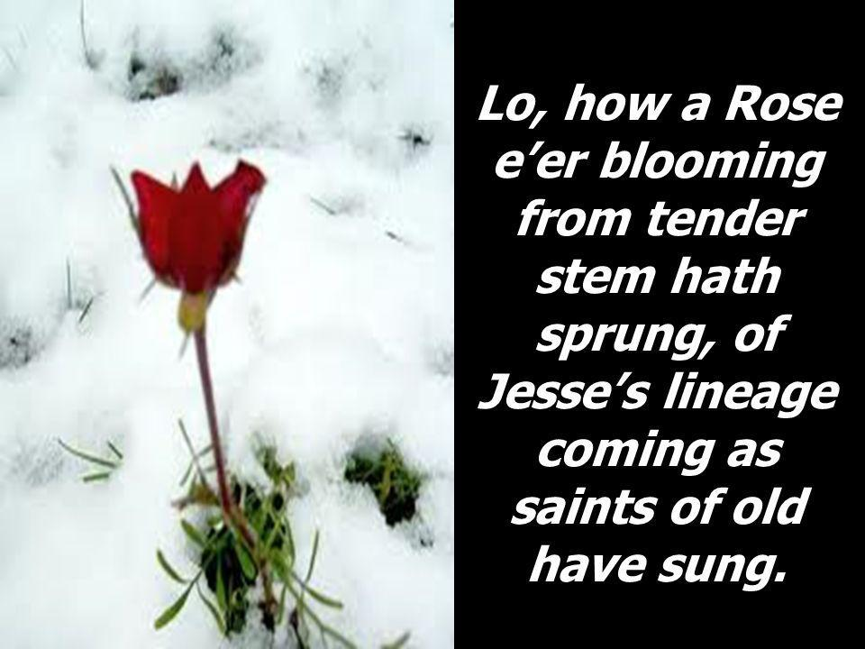 Lo, how a Rose eer blooming from tender stem hath sprung, of Jesses lineage coming as saints of old have sung.