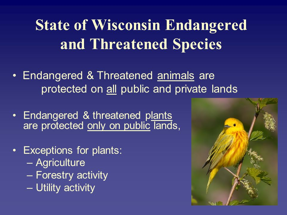 State of Wisconsin Endangered and Threatened Species Endangered & threatened plants are protected only on public lands, Exceptions for plants: –Agricu