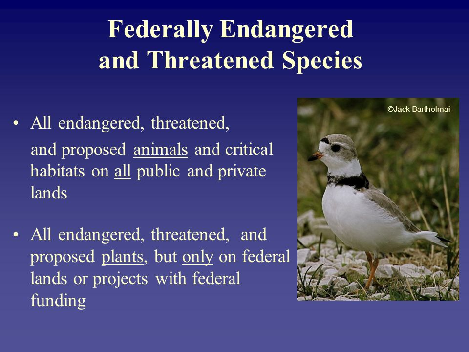Federally Endangered and Threatened Species All endangered, threatened, and proposed animals and critical habitats on all public and private lands All endangered, threatened, and proposed plants, but only on federal lands or projects with federal funding ©Jack Bartholmai