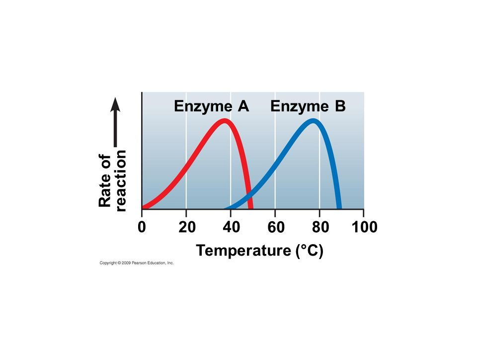 Temperature (°C) 0 20 Rate of reaction Enzyme A 100 Enzyme B 40 60 80