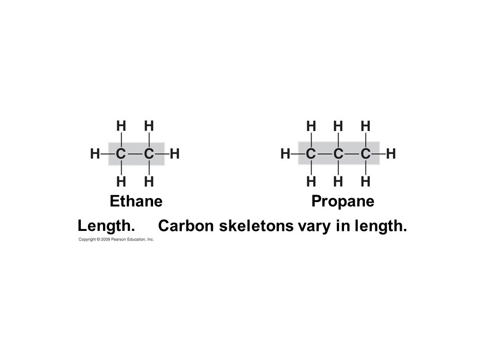 Carbon skeletons vary in length. Propane Ethane Length.