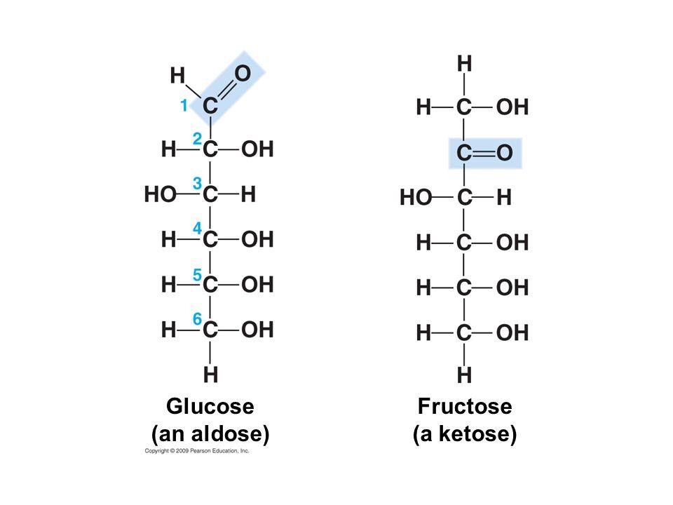 Glucose (an aldose) Fructose (a ketose)
