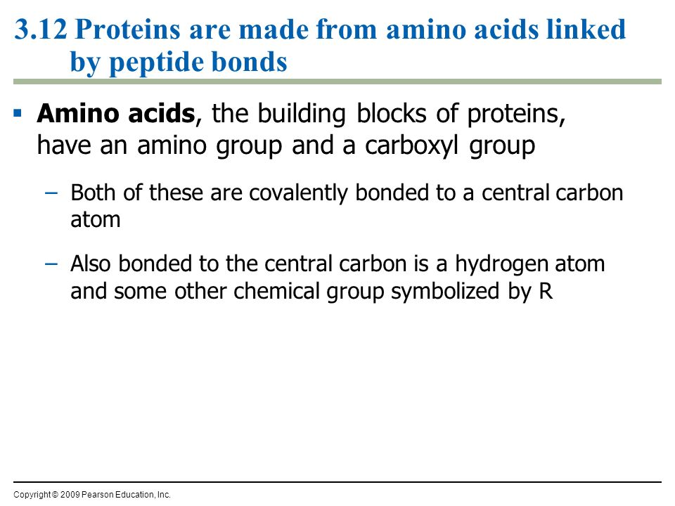 3.12 Proteins are made from amino acids linked by peptide bonds Amino acids, the building blocks of proteins, have an amino group and a carboxyl group