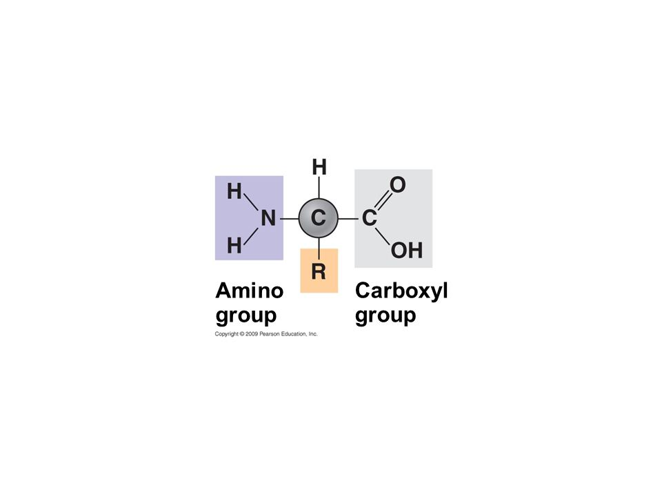 Carboxyl group Amino group