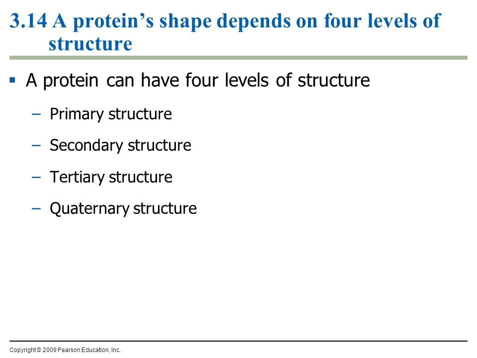3.14 A proteins shape depends on four levels of structure A protein can have four levels of structure –Primary structure –Secondary structure –Tertiar